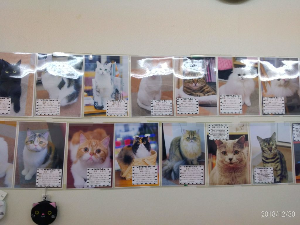 【新宿区】cat cafe にゃんことの評判とは?
