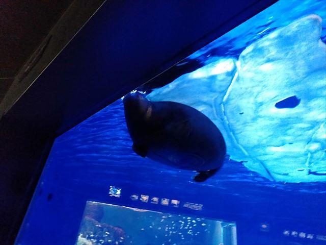 【豊島区】サンシャイン水族館のクラゲ・割引・クーポン・混雑を解説!